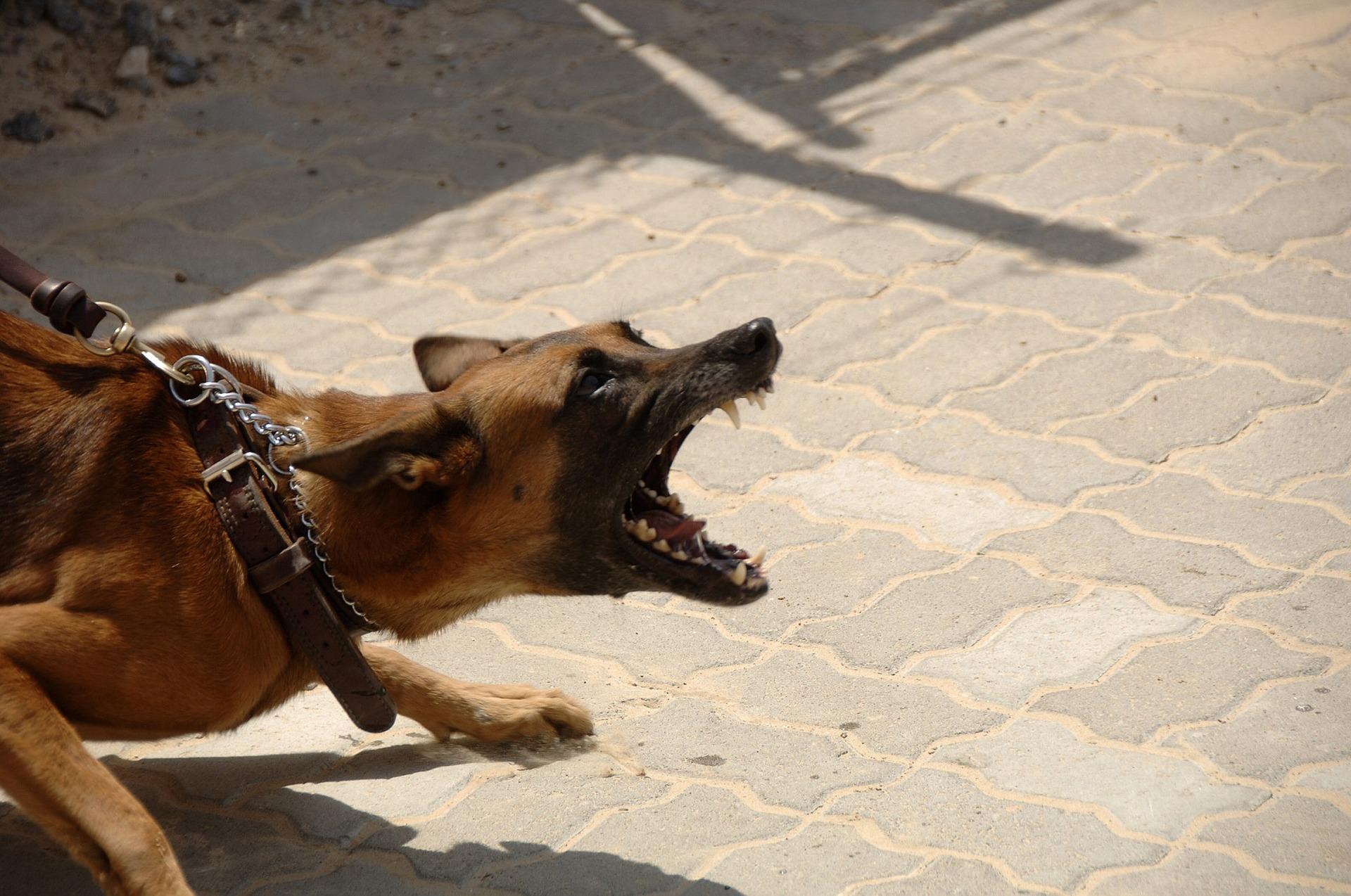 Aggressiveness versus Defensiveness